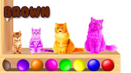 色彩学习 让猫咪 变色的小彩球