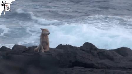 狗狗每日蹲守海岸 原因让人泪崩