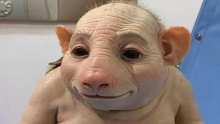 日本科学家研究出半人半猪, 拥有人类器官, 他们到底用来做什么?