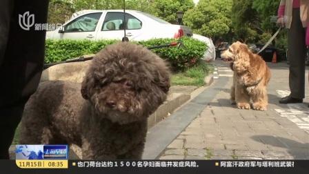 """杭州将开展""""不文明养犬""""行为专项治理 上海早晨 20181115"""
