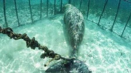 潜水员潜水时惊讶地发现, 在海底有两只动物困在两个笼子中