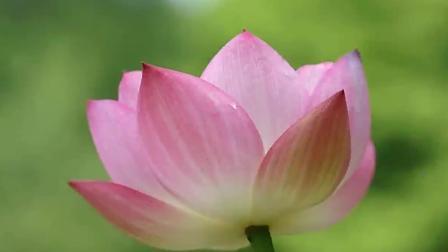 刘紫玲一曲《映山红》, 唱出多少人的心声, 难以忘怀