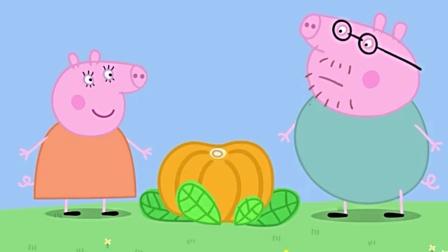 小猪佩奇在公园骑自行车, 撞到了猪爸爸的南瓜, 亲子趣味色彩早教
