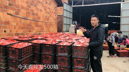江西六毛: 网友下单20000斤蜜桔, 共计500筐, 小伙和果农们好开心