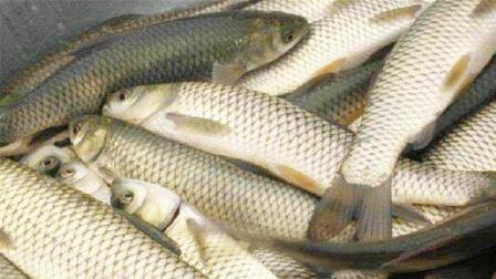 这样的鱼一定不要买, 买了也别吃, 有的话赶紧扔掉, 还好提前知道