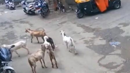 印度小巷内停了一辆三轮车 监控突然拍下不耻画面!