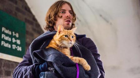 你见过《流浪猫鲍勃》这个猫吗, 帮铲屎官戒了毒, 还找了个超美的小姐姐恋爱!