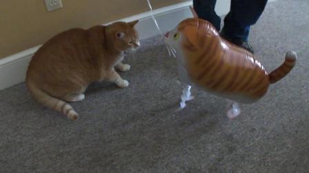 主人给猫咪买来一个充气玩具猫作伴, 结果猫咪一爪子就拍漏气了
