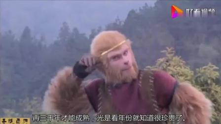 难怪孙悟空会推倒人参果树, 你看看猴哥用火眼金睛发现了啥秘密?