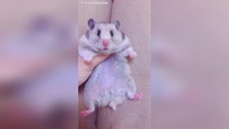 请问怎么能让仓鼠不咬人?