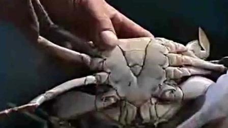 风味人间: 120元一斤, 每一百斤中只有一斤重壳蟹, 这种螃蟹你吃过吗?