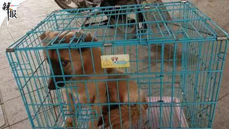 温州市流浪狗连续咬伤73人: 最小2岁
