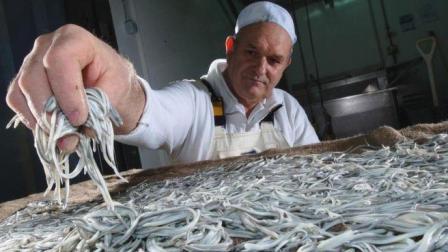 西班牙把这种食物吃到灭绝, 1公斤最贵卖4万, 味道还不如生菜!