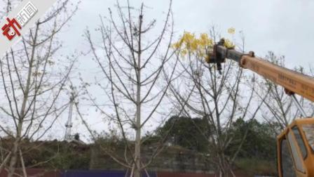 为迎接检查 路边挂人造树叶? 重庆官方: 系商家商业行为
