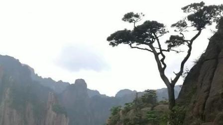 黄山之奇, 悬崖绝壁上长孤树