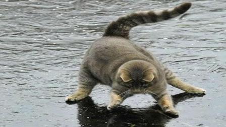 猫咪想捉住冰下的鱼, 一群鸡摇摇摆摆走过来, 下一秒请憋住别笑