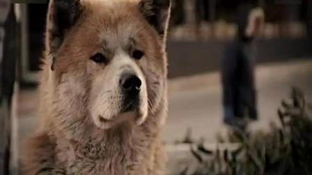忠犬八公的故事 最感人的一幕, 看一次哭一次