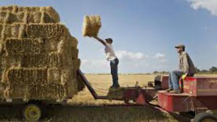 美国产粮那么多, 他们的秸秆都是怎么处理的?