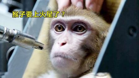 猴子要上火星了? 这国为验证辐射影响, 居然想出这损招!
