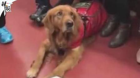 【辣报】最懂事的导盲犬最安静的守护