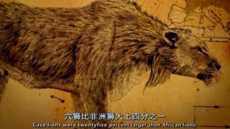 最初以为是洞熊,仔细察看后发现是穴狮的头骨,曾和洞熊打斗过