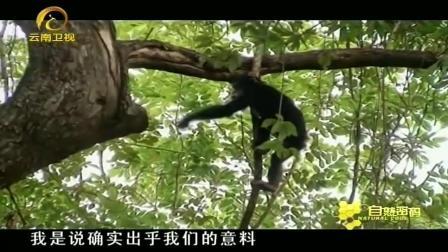 """猩猩捕猎行为""""异常"""", 人与动物界限被打破, 消息一出引轩然大波"""