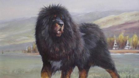 藏獒大战比特犬, 全程碾压