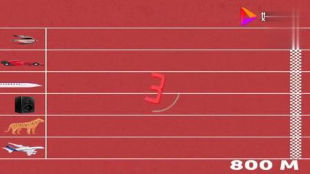 地球上跑得最快的前十名分别是啥? 猎豹倒数第一, 第三是中国速度