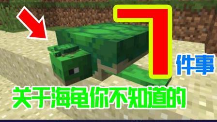 我的世界: 海龟你不知道的7件事! 整个MC唯一能记住出生点的生物!