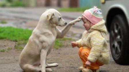 """救过几万只动物生命的保护者, 他的回忆: """"被杀的小狗肚里有着一个它的宝宝! """""""