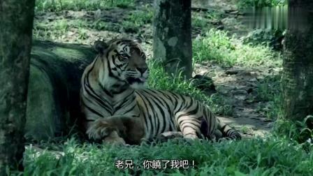 《水浒笑传》这老虎是武松打死的