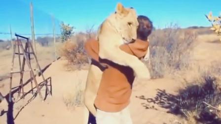 我以前救了一只受伤的小狮子, 它看着我, 等我们距离只有两米的时候, 我发现, 我认错了