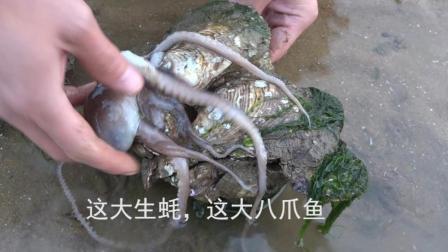 小渔赶海: 天冷赶海收获就是好, 捡个大生蚝底下还送了个大家伙!