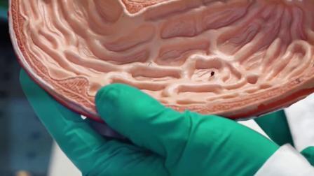 老外发明的微型机器人, 能直接进入血管, 为人类检查身体!