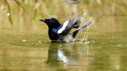 家里的小鸟一天天长大, 食量也越来越大