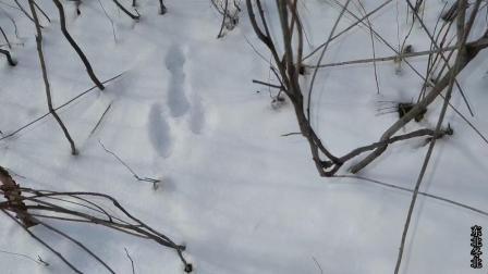 林海雪原, 农村小伙看到啥脚印? 高兴地屁颠跟上去, 结果尴尬了