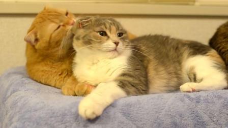 被两只可爱的猫咪秀了一脸的恩爱