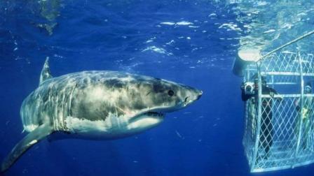 两位美女在海底与鲨鱼之间的斗智斗勇, 3分钟带你看完《鲨海》