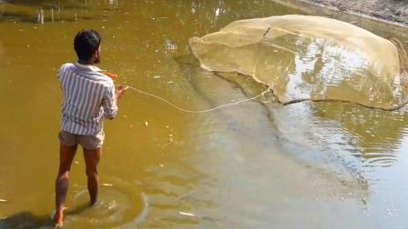 撒网捕鱼: 一个快干涸的水塘, 农村小伙撒了一网, 收获良多