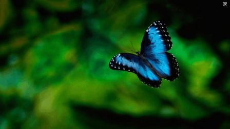 《蝴蝶效应》如果重来一次, 你会选择改变什么?