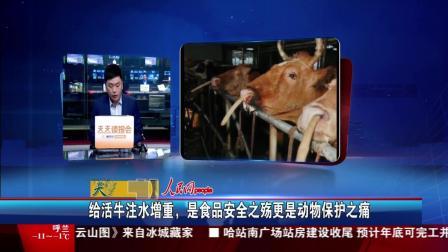 给活牛注水增重, 是食品安全之殇更是动物保护之痛