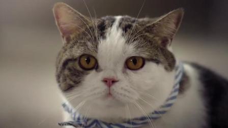 如果喵星人要反击人类怎么办? 《看猫咪反击人类》泰国神广告