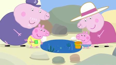 小猪佩奇: 佩奇一家舞沙滩玩耍, 还在海边找到宝藏了, 运气真好!