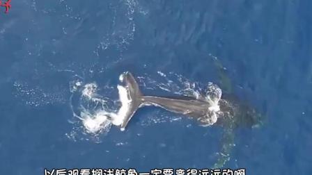 你知道搁浅的鲸鱼会爆炸吗