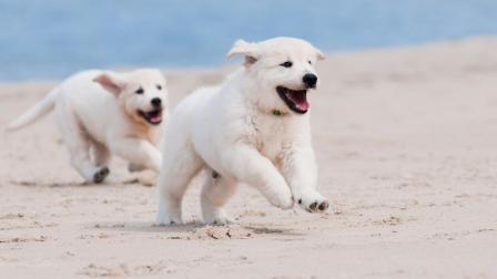 狗狗的叫声, 你知道都是什么意思吗, 它可不止是会汪汪叫哦