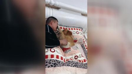 男主人和金毛在床上亲亲我我, 媳妇看到这场面气的咬牙!