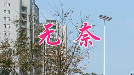 徐小凤演唱《无奈》, 一首缠绵动听的经典歌曲