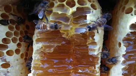 一个普通的蜂箱, 既然能产出二到三十斤蜂蜜, 网友们却不信小伙
