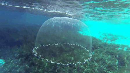 百万年薪渔民撒网堪称艺术, 渔网自带追踪, 变成圆形完美入水