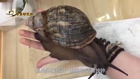 南非美食家国家, 非洲蜗牛几乎绝种, 网民们把江坝吹向低风。